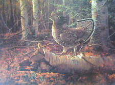 Ruffed Grouse ob log in Forest  by Owen Gromme