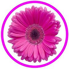 PINK DAISY - FUN CAR TAX DISC HOLDER - REUSABLE - GIFT -  BRAND NEW