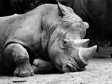 NATURE PHOTO RHINO BLACK WHITE HORN POSTER ART PRINT PICTURE BB187A