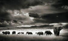 Large Framed Print - Herd of Elephants Roaming Black & White (Picture Animal)