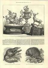 1875 The Ascot Prize Plate Tree Shrew And Porcupine