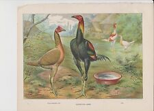 Ludlow Original Poultry Lithograph 1880
