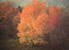 Alte Postkarte - Maples