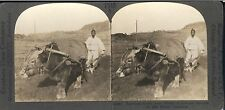 KOREAN FARMER IN WHITE COSTUME PLOWING A FIELD NEAR SEOUL STERO