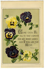 vintage book illustration - pansies with bible quote - matthew 11.28