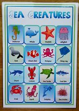 SEA CREATURES A4 Laminated poster- EYFS / SEN/ Toddler/ first learning - NURSERY