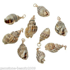 GB 5PCs Shell Charm Pendants Conch Natural At Random B58766