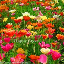 CALIFORNIAN POPPY MIX - Escholtzia californica - 700 EUROPEAN SEEDS - FLOWER