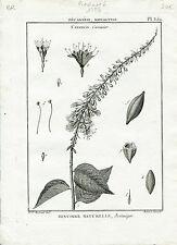 Redouté P.J Célèbre Peintre - Rare Gravure Originale de 1789 - Cacoucier Pl 359