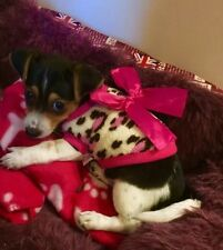 Tea Cup Chihuahua (XXS Size) Cosy Fleece Leopard top & Pink Bow Pet Dog Clothes