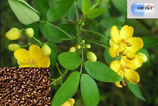 DR T&T 100g dry herb of  jue ming zi / Cassia Seed / Semen Cassiae