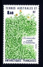 TAAF - 1990 - Flora dell'Antartide - Ranunculus pseudotrullifolius