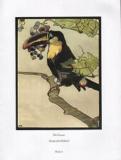 BEAUTIFUL VINTAGE BIRD PRINT ~ THE TOUCAN ~ PICTURES FROM BIRDLAND DETMOLD