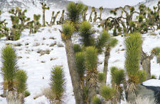 Cold Hardy Cacti & Succulents - All Good to 0F/-17C - 10 Packs of Seed