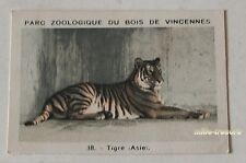 Image Collection CHROMO : TIGRE (ASIE) (38) PARC ZOOLOGIQUE de VINCENNES PF