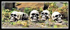 Skull set of 5 for Miniature Garden Fairy/Faerie Gnome Hobbit Fairy GO 16497