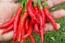 Thai Red Sweet Chilli - A Great Sweet Chilli Comes with Beautiful Flavour!