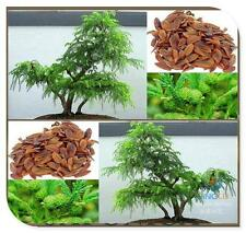 RED CEDAR Japanese Bonsai X20 Seeds