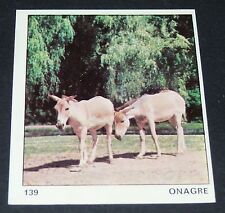 N°139 ONAGRE ANE SAUVAGE PANINI 1970 TOUS LES ANIMAUX EDITIONS DE LA TOUR