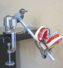 DENTAL ORTHODONTIC TRAINING MODEL MANIKIN WITH BENCH MOUNT BRAND NEW MANY AVAIL