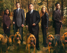 Without A Trace [Cast] (40946) 8x10 Photo