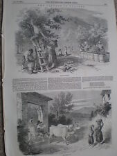 The wine grape harvest in Italy 1849 old print my ref T