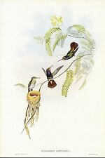 """1990 Vintage HUMMINGBIRD #342 """"RED THROATED SAPPHIRE"""" WOW! GOULD Art Lithograph"""