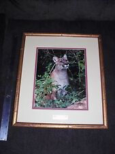 Numbered SIGNED RICK PREBEG Lion Female Zoofari Patron 1985 Photo Picture framed