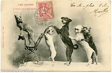 CIRQUE. CIRCUS. CHIENS SAVANTS. SPECTACLE. SHOW. DOGS SCIENTISTS.