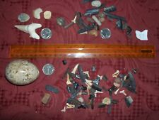 100 fossils, coral egg trilobite ammonites shark teeth stingray barbs teeth