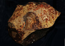 HI-RES 8X10 PHOTO OF A IMAGE OF JESUS CHRIST THAT WAS FOUND IN A ROADSIDE ROCK