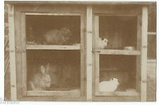 BM504 Carte Photo vintage card RPPC Animaux cage clapier lapin