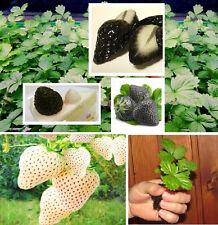 Jetzt säen ! ❦❦ lecker winterharte Schwarze & Weiße Erdbeeren ❦❦ Super Samen-Set