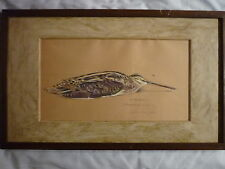 aquarelle gouachée becassine gelée ANDRIEUX 1931 chasse  snipe NO  Rotig  Riab