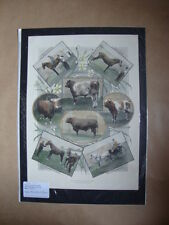 Genuine Hand Coloured Antique Print of Leicester Agricultural Show. by Anon
