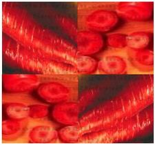 (100) ATOMIC RED Carrot seeds -  Combined S&H