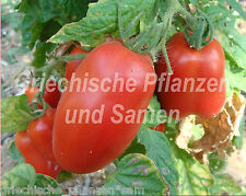 Paste italian plum tomatoes Tomaten 10 fresh seeds Balcony Tub