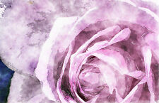 Framed Print - Watercolour Effect Print of a Purple/Pink Rose (Flower Picture)