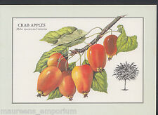 Nature Postcard - Fruit Tree - Crab Apples, Malus Species and Varieties  LC5974