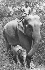 CPA ELEPHANTE DES INDES ET SON PETIT