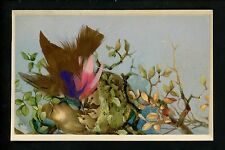 Novelty Feather Add On postcard Bird w/ babies in nest Vintage greetings