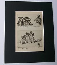 Print German Shepherd Wire Hair Terriers Dog Diana Thorne Double Bookplate 1936