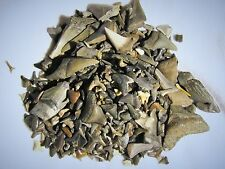 50 fossil shark teeth per lot.