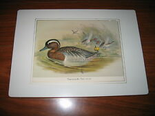 1804-1888 Garganey by John Gould Birds Gilt Edges Paper Litho Print on Wood Gold