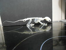 Taxidermy Squirrel Skeleton ornament  Weird Stuff Skull museum science