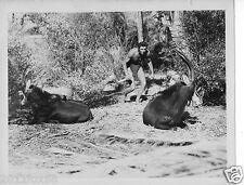 foto di scena lex barker tarzan fotografia originale 26x20 anni 50 photo rare
