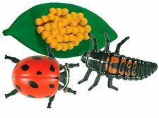INSECT LORE Lady Bug Life Cycle Stages, PreK-3