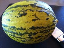 Santa Claus Melon Seeds! SWEET AND DELICIOUS! 10 Seeds- Easy to grow. Comb. S/H