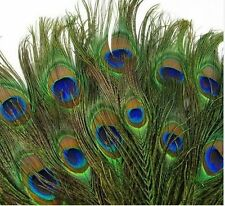 Christmas 8-12'' REAL 200pcs Peacock Tail Feathers Eyes DECOR Decoration CMKB