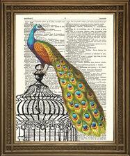 Pavo real en la página de Libro Diccionario Antiguo jaula de pájaro: precioso vintage impresión de arte